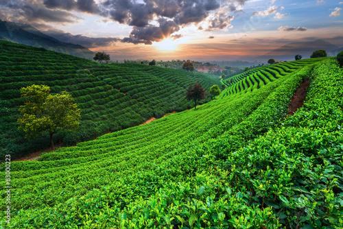 Deurstickers Groene Tea Plantations under sky