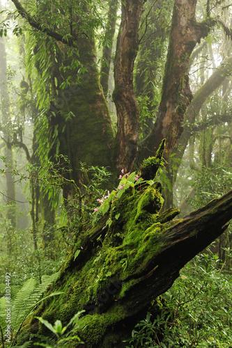 Fotografia  Selva de Nepal