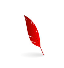 Red Feather Isolated On White ...