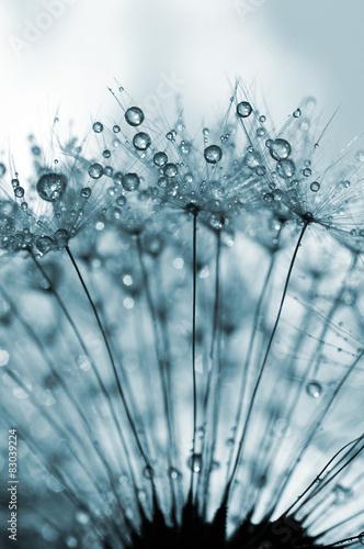 Dewy dandelion #83039224