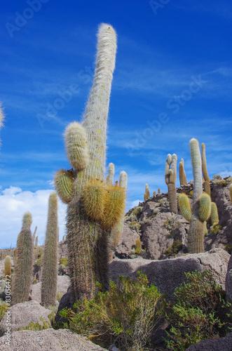 Papiers peints Cactus Incahuasi island, Salar de Uyuni, Bolivia