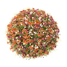 Flower Ball On A White Background