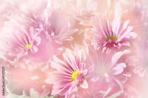 Foto op Canvas Bloemen Floral background, pink flowers on blurred background