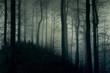 Ciemny, mroczny las w białej mgle