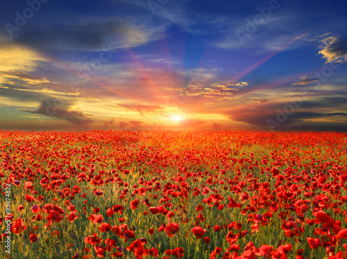 Fototapeta sunset over poppy field obraz na płótnie