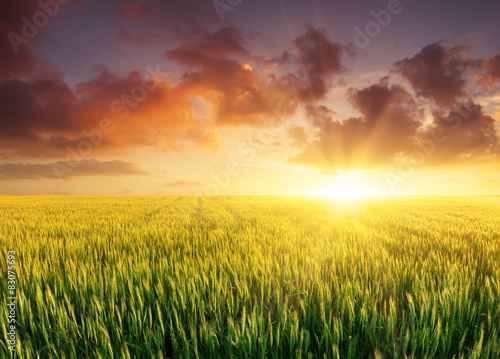 Spoed Foto op Canvas Oranje Filed during bright sunset. Agricultural landscape