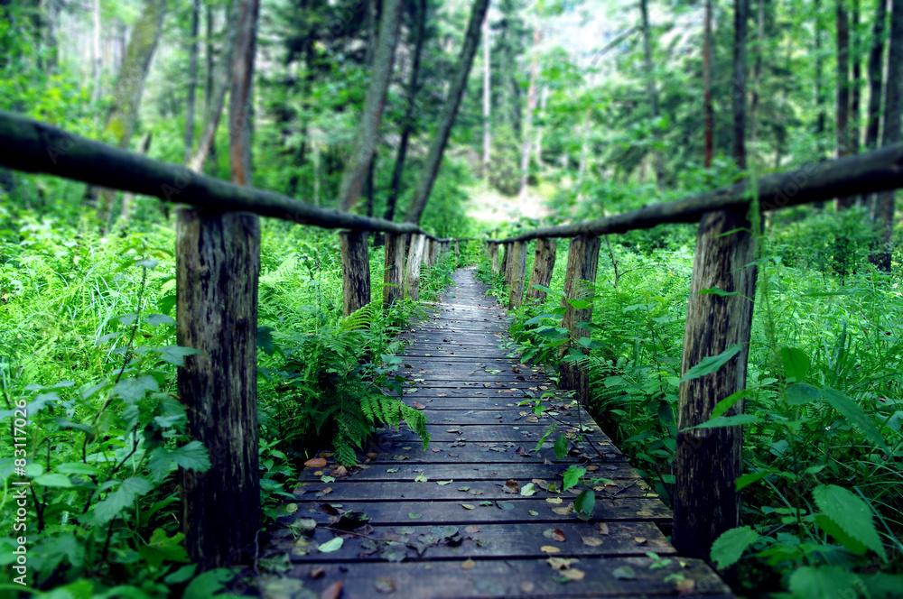 Fototapety, obrazy: Drewniany most w środku lasu, Susiec, Polska