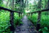 Drewniany most w środku lasu, Susiec, Polska