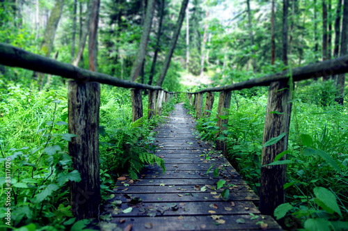 Fototapeta Drewniany most w środku lasu, Susiec, Polska obraz