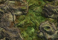 Seamless Terrain Texture Map