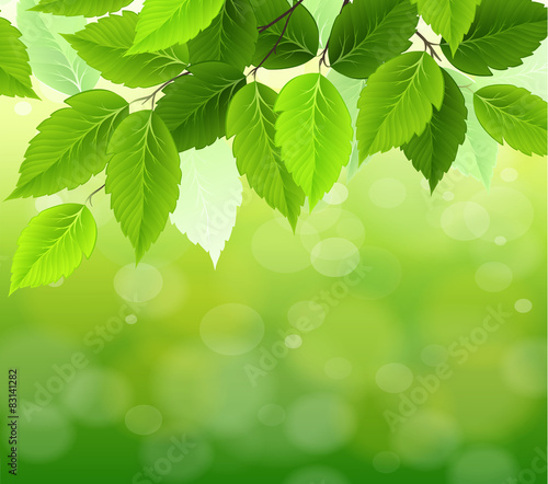 Fototapety, obrazy: natural green background with selective focus
