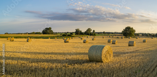 Fotografie, Obraz  field after the harvest