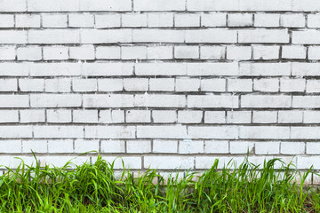 FototapetaWhite brick wall and fresh green grass