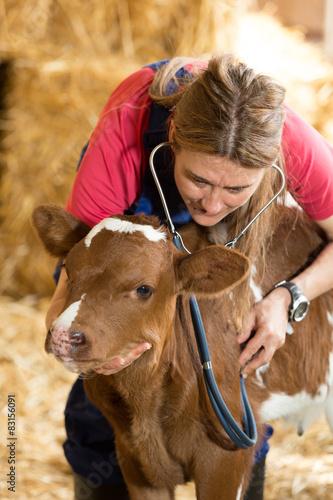 Fotografia  Veterinary on a farm