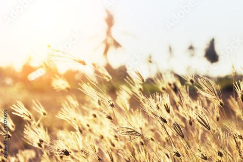 Fotomural prairie