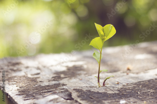 Fotografia  plants