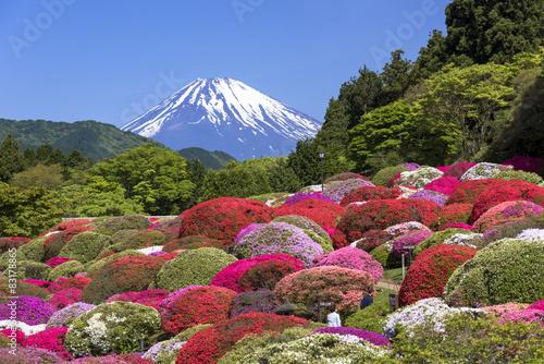 Papiers peints Azalea 満開のつつじと富士山