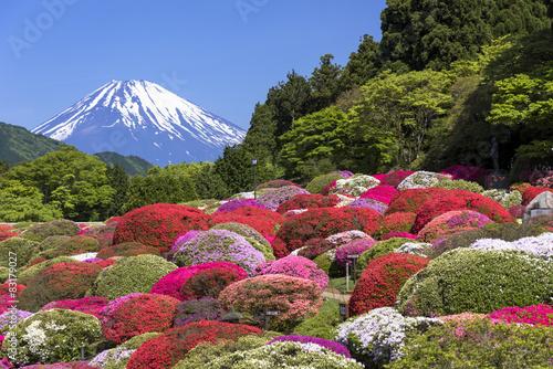 Deurstickers Azalea 満開のつつじと富士山