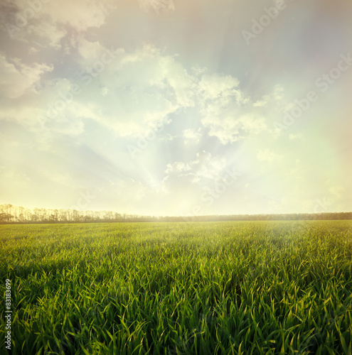 Fotobehang Zwavel geel Green field and sky with light clouds