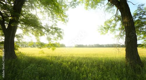 Tuinposter Zwavel geel landscape