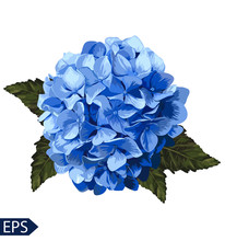 Vector Blue Realistic Hydrangea, Lavender. Illustration Of