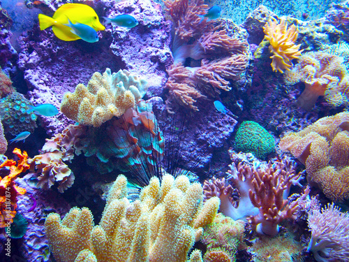 Poster Coral reefs Barriera Corallina 2