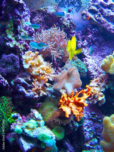 Staande foto Koraalriffen Barriera Corallina