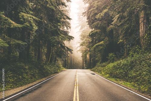 Fényképezés Foggy Redwood Highway