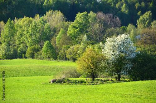 Poster Lime groen Colorful spring landscape