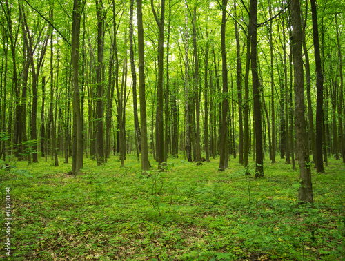 forest green #83200041