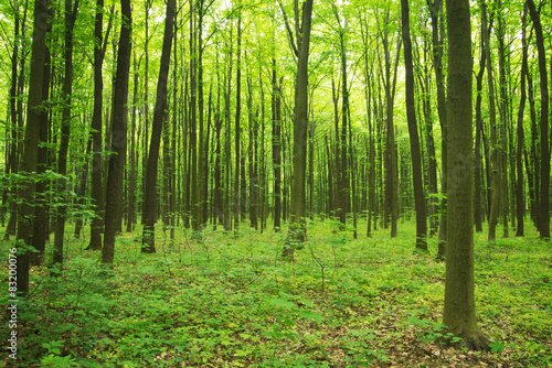 forest green #83200076