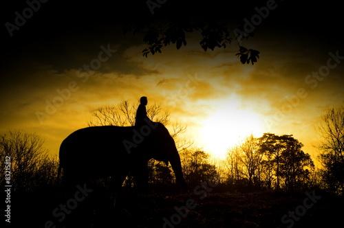 Wall Murals Beautiful morning asian elephant