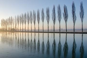 Alberi riflessi sul lago all'alba