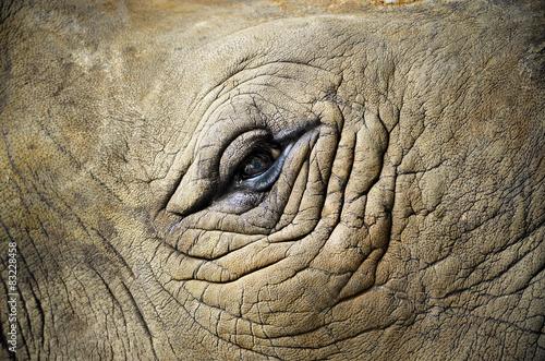 Eye of the rhino/  Focus on the eye