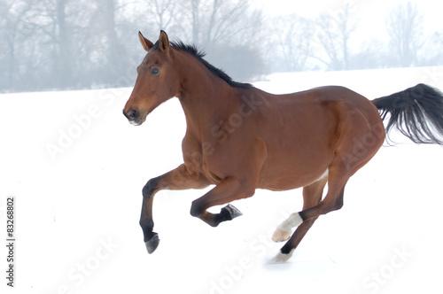 Photo  horse running on snow