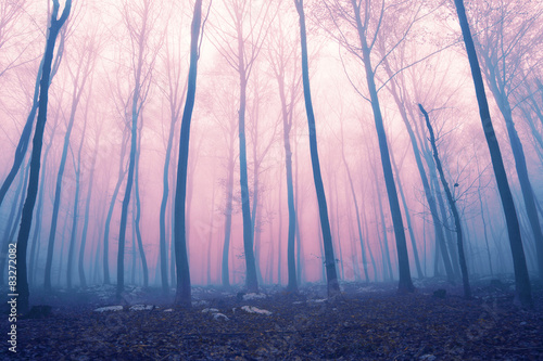 Fantasy color foggy fairytale forest