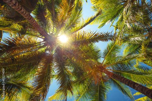 Foto auf AluDibond Palms Coconut palm trees perspective view