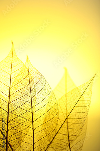 Foto op Aluminium Decoratief nervenblad Skeleton leaves on yellow background, close up