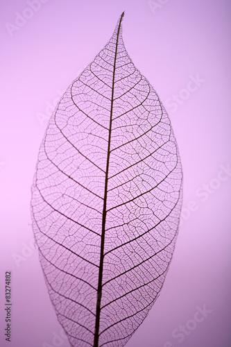 Poster Squelette décoratif de lame Skeleton leaf on purple background, close up