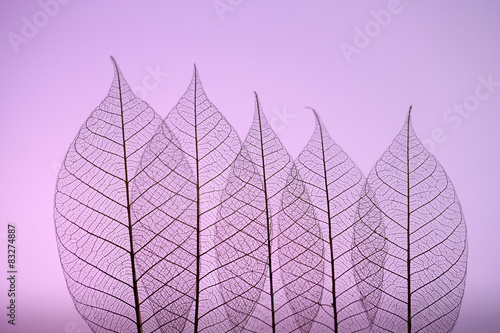 Photo sur Aluminium Squelette décoratif de lame Skeleton leaves on purple background, close up