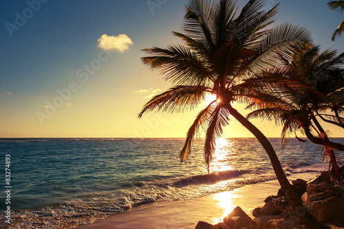 Foto op Canvas Zwavel geel Palm tree on the tropical beach