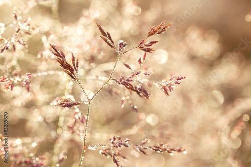 Fototapeta łąka laka-z-rosa