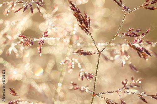 Fototapeta łąka na-lace-latem