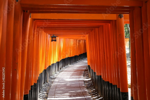 Photo sur Aluminium Kyoto 伏見稲荷千本鳥居