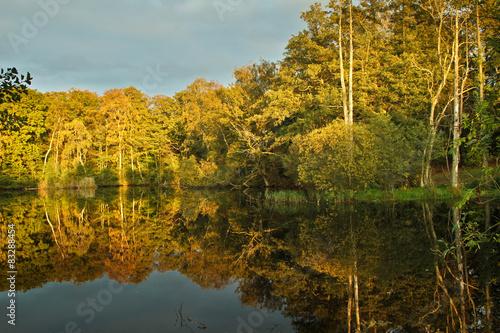 Foto op Canvas Bomen lake in a forest