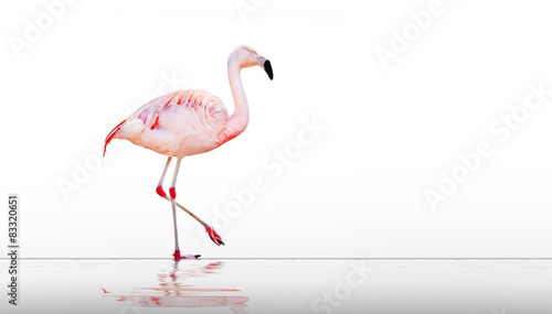 Tuinposter Flamingo Pink flamingo on the beach.