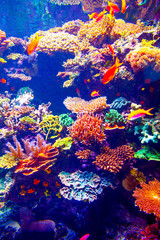Obraz na PlexiCoral Reef and Tropical Fish
