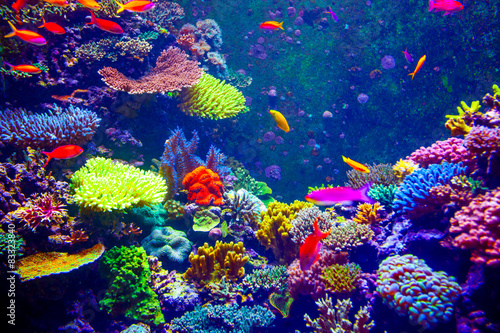 Photo  Coral Reef and Tropical Fish