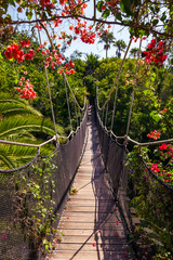 Fototapeta Mosty Footpath in jungle - Tenerife Canary islands