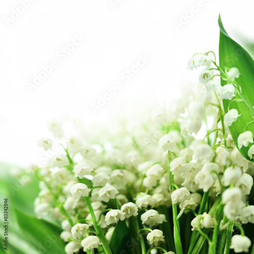 Wall Murals Lily of the valley konwalie